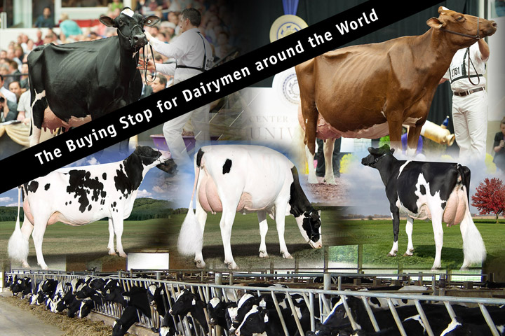 The Buying Stop for Dairymen Around the World